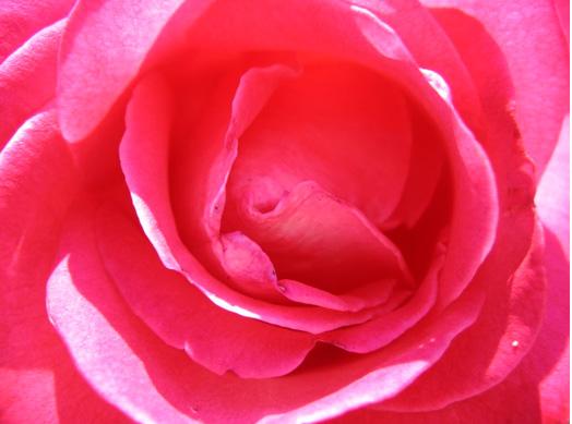 fleurs : a chaque couleur, une signification - cadeau pour tous