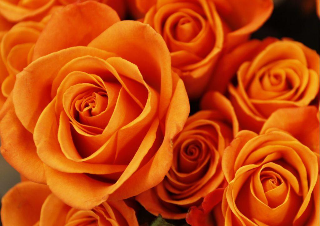 Cadeau pour tous, fleurs significations, Couleur orange