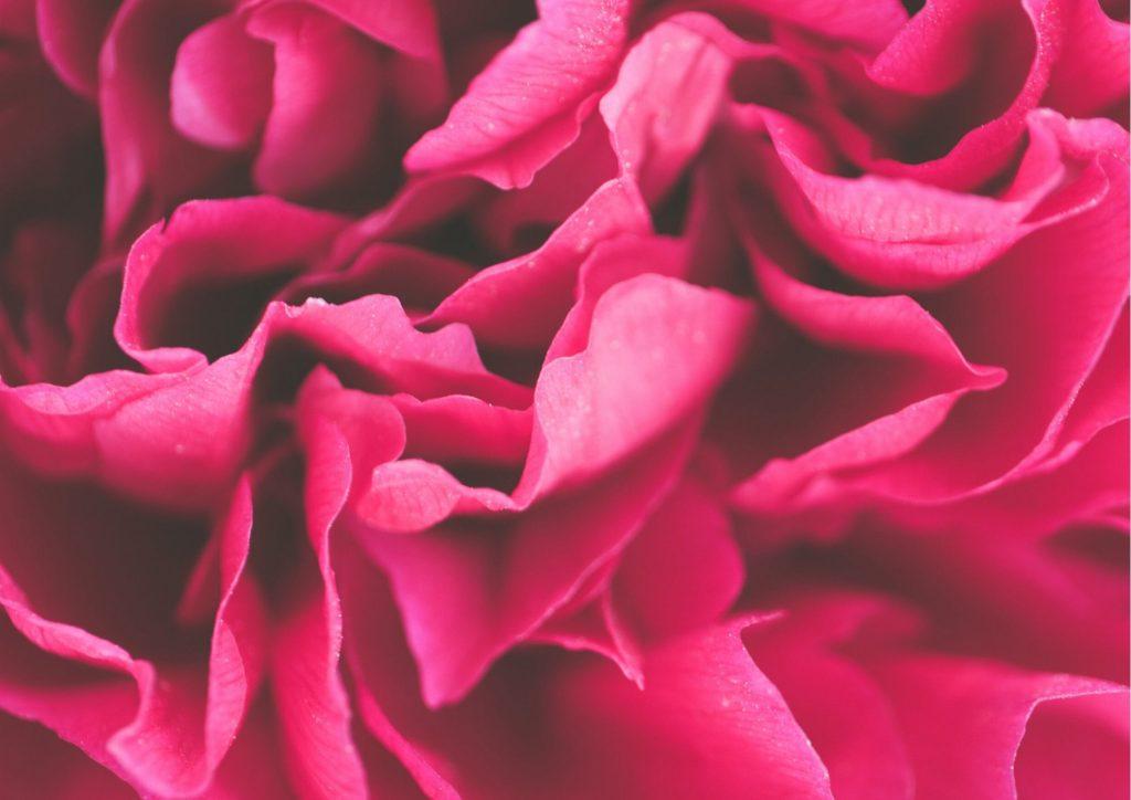 Cadeau pour tous, fleurs significations, Couleur rose