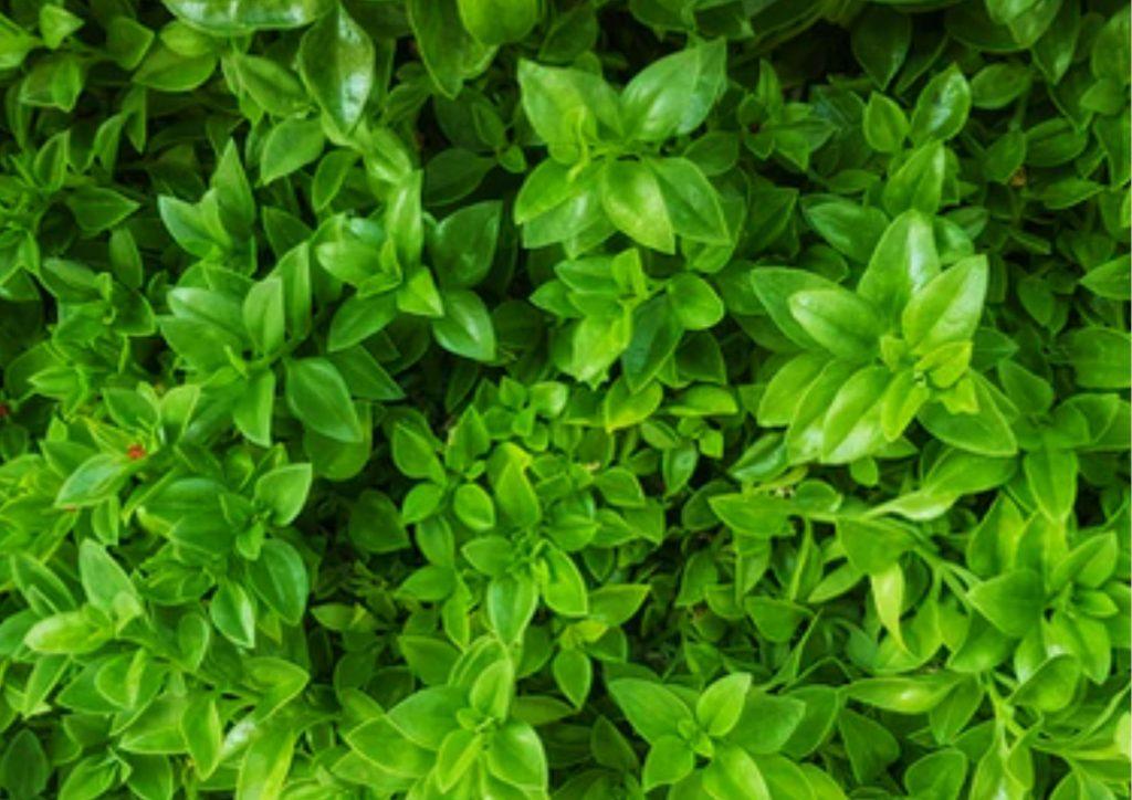 Cadeau pour tous, fleurs significations, Couleur verte