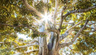 arbre généalogique